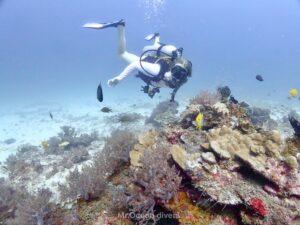 プーケットでダイビング ラチャノイ島のサンゴとダイバー
