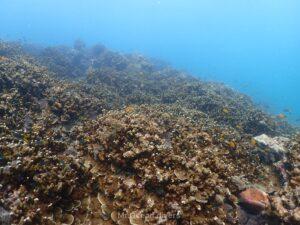 プーケット カタビーチでダイビング サンゴ礁