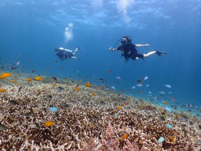 プーケットのダイビングショップ サンゴ礁と泳ぐダイバー